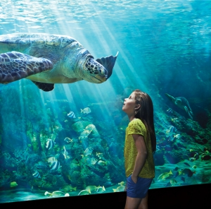 Neuer SeaWorld Park in Abu Dhabi eröffnet 2022