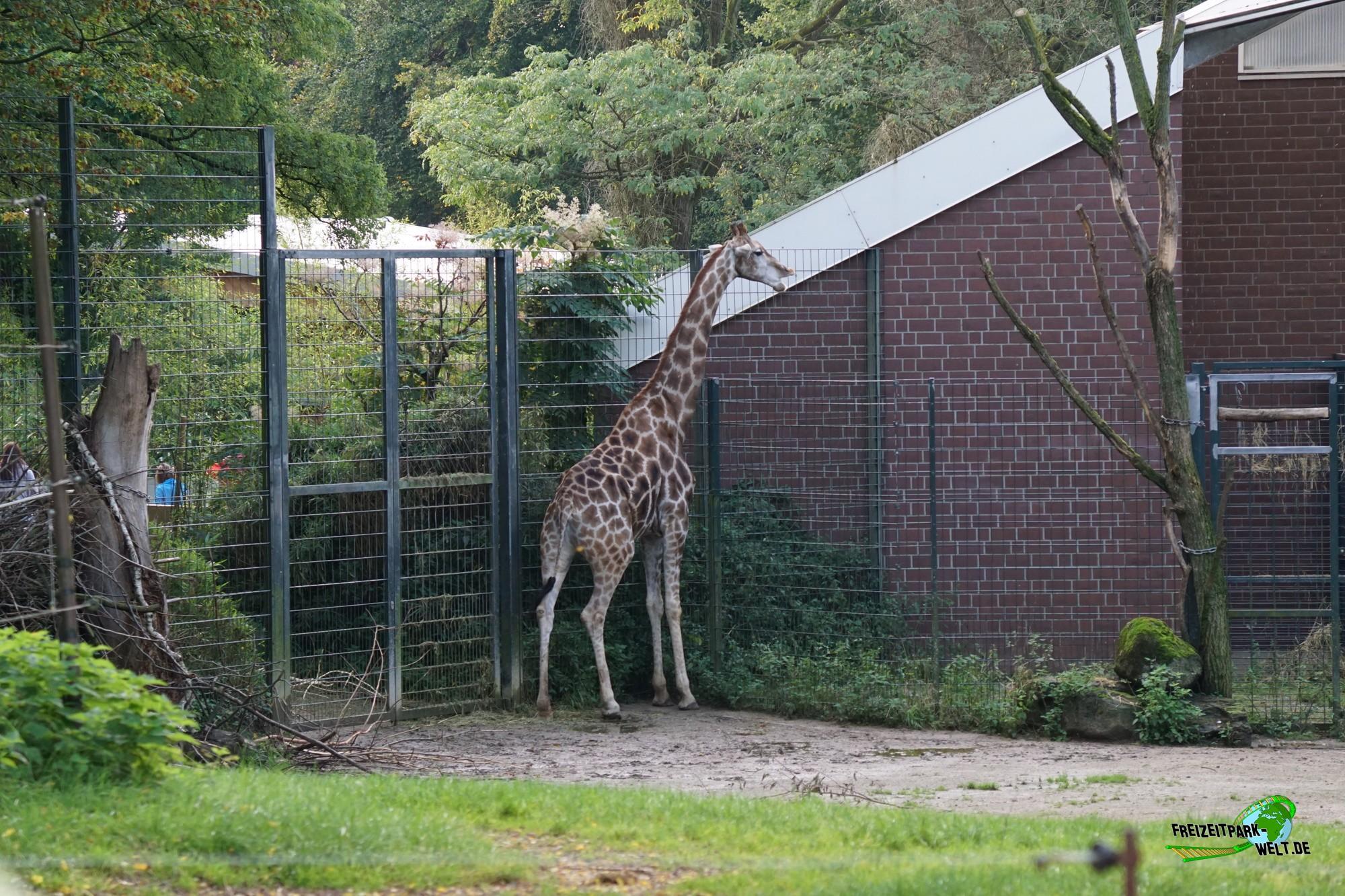 giraffe zoo dortmund freizeitpark. Black Bedroom Furniture Sets. Home Design Ideas